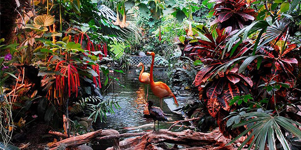view of victoria butterfly garden featuring exotic plants and flamingos