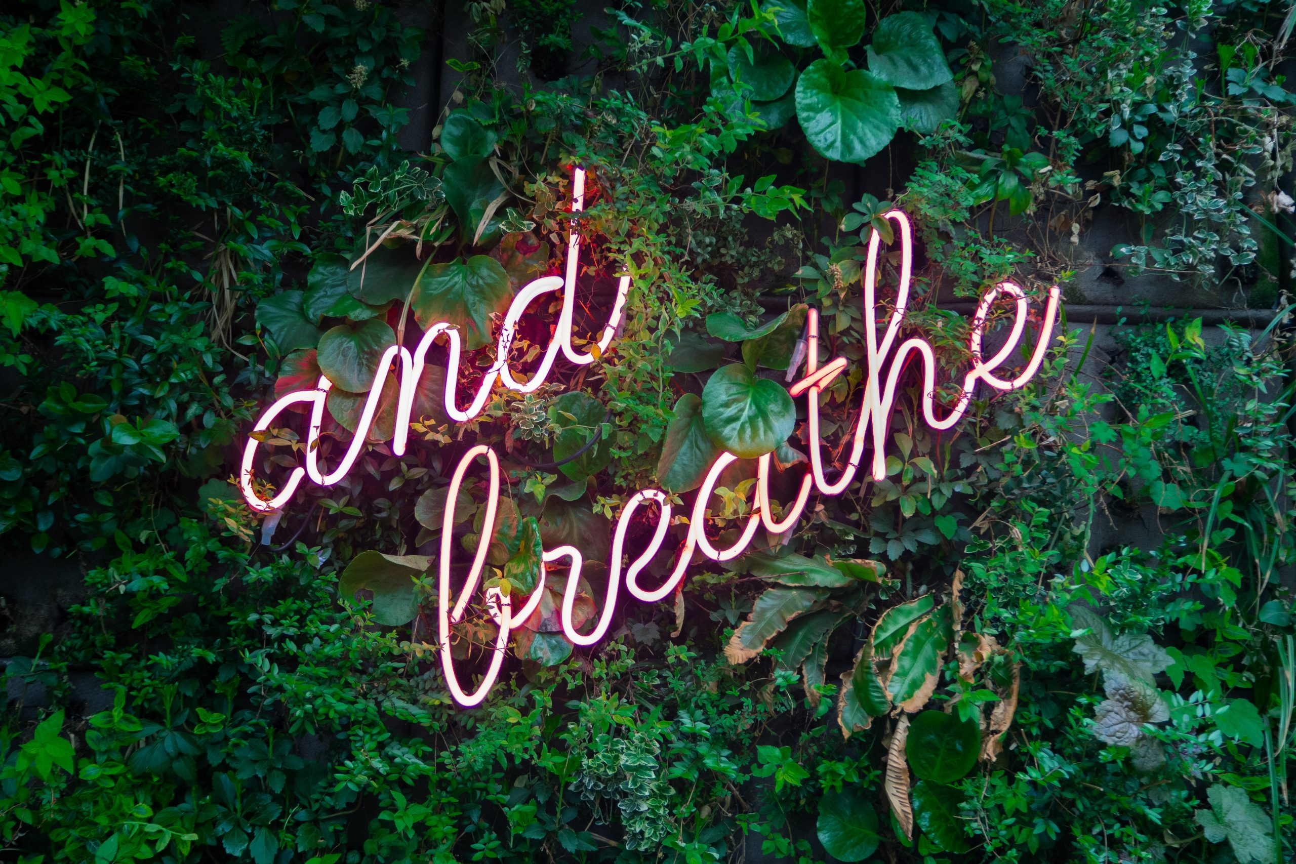 """Photo of a vertical garden wall with a neon sign at the center that says """"And Breathe"""""""